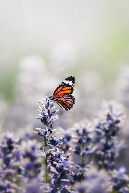 Motyl Na Wolności Darmowe Zdjęcia