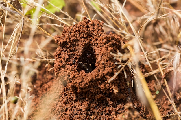 Mrówki W Gnieździe Premium Zdjęcia