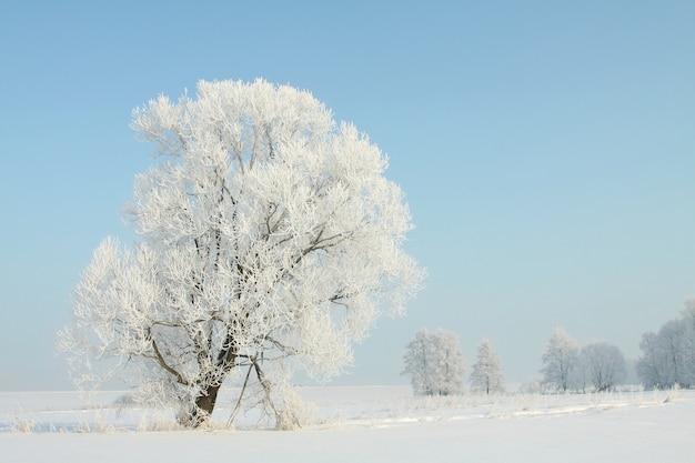 Mroźne Drzewo Zima Na Polu W Bezchmurny Poranek Premium Zdjęcia