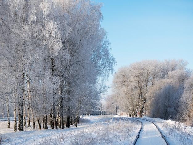 Mroźny zimowy poranek. piękny śnieżny brzoza krajobraz Premium Zdjęcia