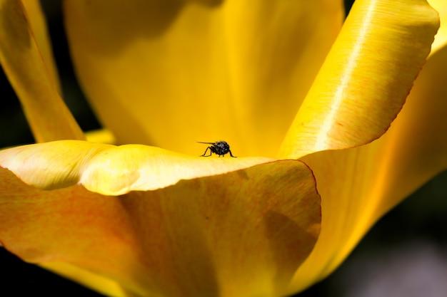 Mucha Siedząc Na żółtych Płatkach Kwiatu Darmowe Zdjęcia