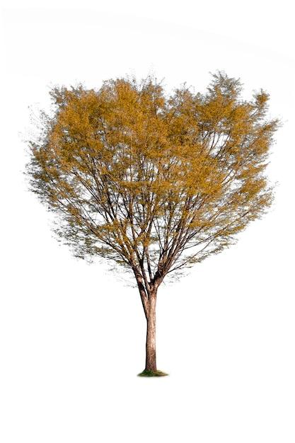 Na Białym Tle Drzewa Do Dekoracji Ekologii Premium Zdjęcia