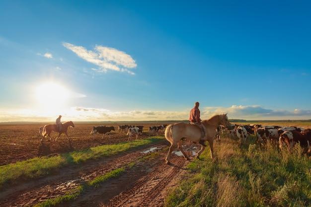 Na Pastwiskach Konnych Pasą Się Krowy Premium Zdjęcia