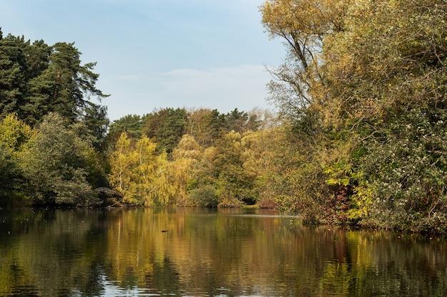 Nad Rzeką Drzewa O żółtych Liściach Premium Zdjęcia
