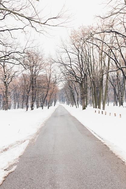 Nagie drzewa blisko pustej drogi podczas zimy Darmowe Zdjęcia
