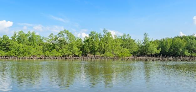 Namorzynowy Las Ostryga Uprawiać Ziemię W Phang Nga Zatoki Parku Narodowym I, Tajlandia Premium Zdjęcia