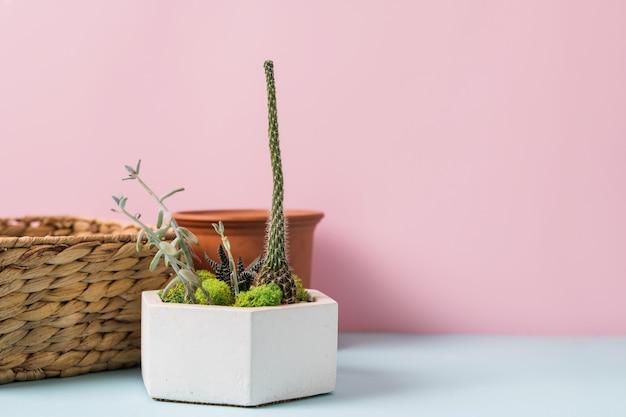 Narzędzia Ogrodnicze Do Domu Na Niebieskim I Różowym Tle. Wiosenne Prace Domowe. Wysokiej Jakości Zdjęcie Premium Zdjęcia