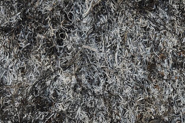 Natura Spłonęła Po Pożarze. Tło Z Popiołów Spalonej Trawy Premium Zdjęcia
