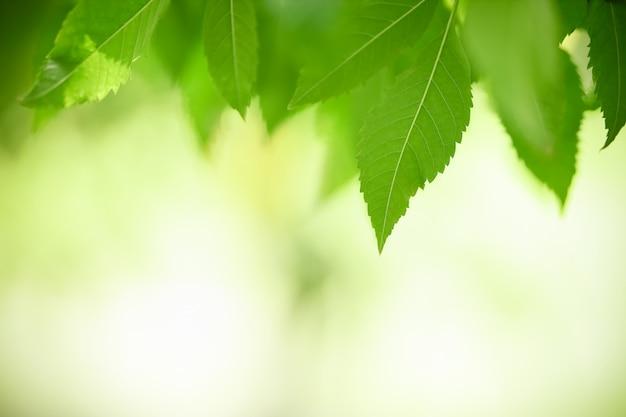 Natura Widoku Zieleni Liść Na Zamazanym Greenery Tle Pod światłem Słonecznym Premium Zdjęcia