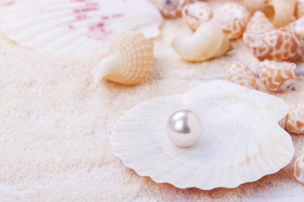 Naturalna Perła W Muszli Premium Zdjęcia