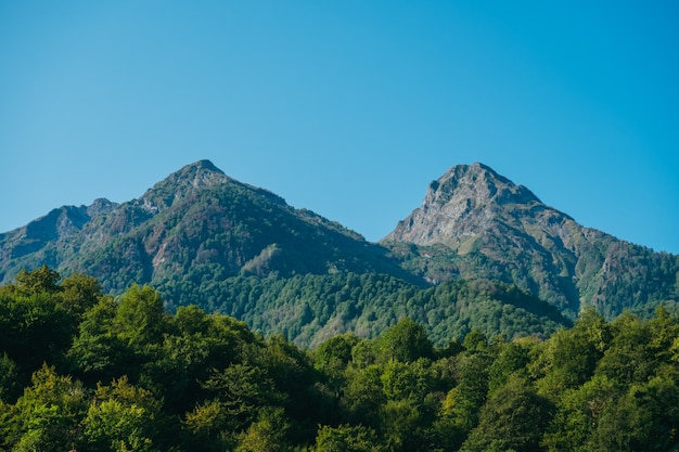 Naturalny Krajobraz Tapety Z Wysokimi Górami I Lasem Na Tle Błękitnego Nieba Premium Zdjęcia