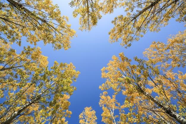 Naturalny Krajobraz Widok Darmowe Zdjęcia