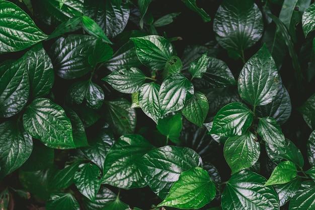 Naturalny Zielony Tło Zielony Liść Premium Zdjęcia