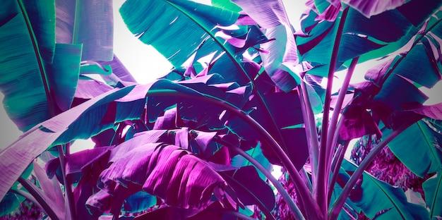 Neon fioletowy banan pozostawia streszczenie tło Premium Zdjęcia