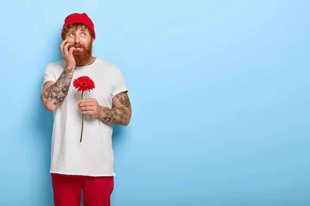 Nerwowy Hipster Z Czerwoną Gęstą Brodą, Trzyma Czerwoną Gerberę, Gryzie Paznokcie, Martwi Się Przed Pierwszą Randką Z Dziewczyną, Nosi Kapelusz I Białą Koszulkę Na Co Dzień Na Niebieskiej ścianie. Mężczyzna Z Kwiatem Darmowe Zdjęcia