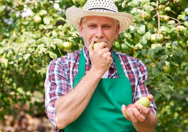 Nic Nie Smakuje Lepiej Niż Jabłko Z Własnego Ogrodu Darmowe Zdjęcia