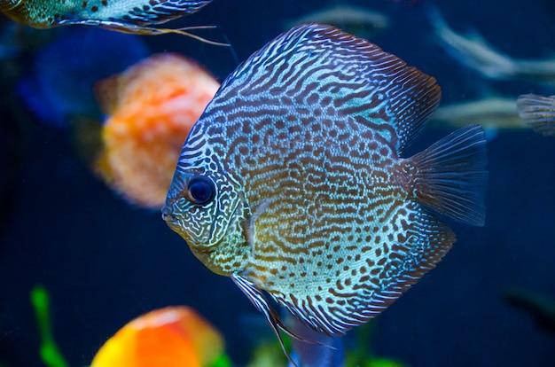 Niebieska Ryba Rafa Koralowa Premium Zdjęcia