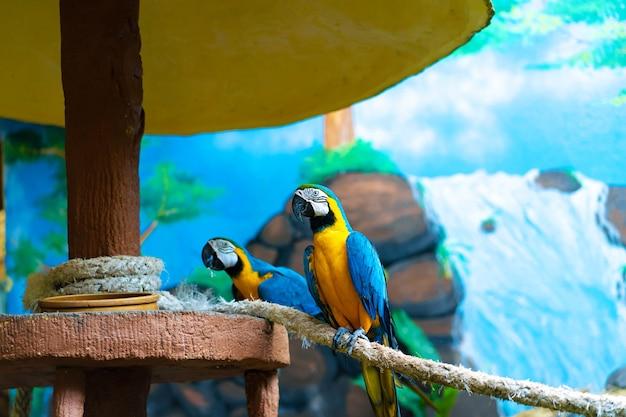 Niebieska żółta Papuga Ara Siedzi Na Gałęzi. Premium Zdjęcia