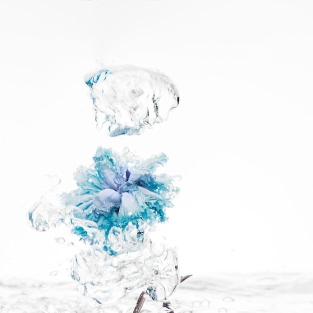 Niebieski Goździk Wpada Do Wody Darmowe Zdjęcia