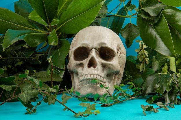 Niebieskie i zielone tło z zielonych świeżych liści i roślin i wiosłować. Premium Zdjęcia
