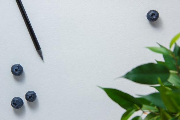 Niektóre Ołówek Z Czarnymi Jagodami, Roślina Na Białym Tle, Odgórny Widok. Miejsce Na Tekst Darmowe Zdjęcia