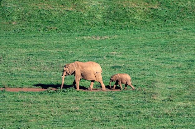 Niesamowite słonie na łące Premium Zdjęcia