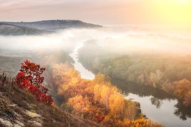 Niesamowity Jesienny Krajobraz Z Mgłą Premium Zdjęcia