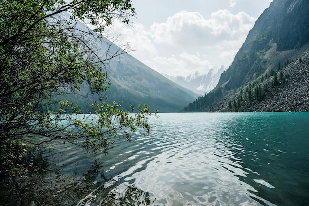 Niesamowity Widok Przez Drzewa Na śnieżne Góry I Medytacyjne Zmarszczki Na Lazurowej, Czystej, Spokojnej Wodzie Premium Zdjęcia