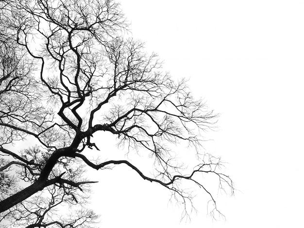 Nieżywa gałąź drzewna sylwetka odizolowywająca Premium Zdjęcia