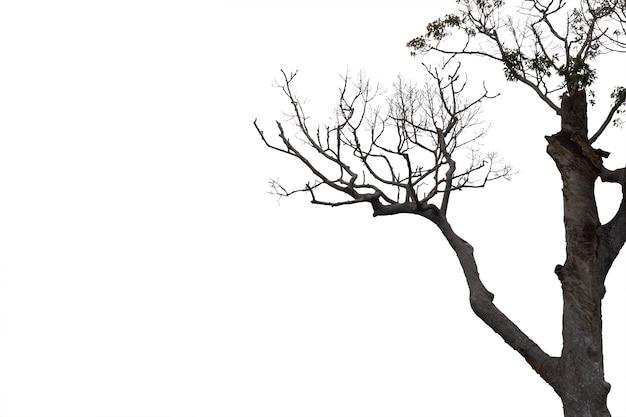 Nieżywe Gałąź, Sylwetki Nieżywy Drzewo Lub Suchy Drzewo Na Białym Tle Z ścinek ścieżką. Premium Zdjęcia