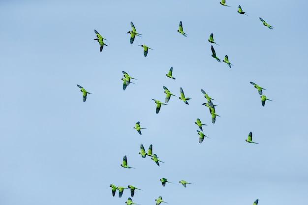 Niski Kąt Widzenia Stada Ptaków Lecących W Błękitne Niebo W Ciągu Dnia Darmowe Zdjęcia