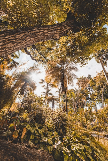 Niski Kąt żółte Drzewa W Lesie W Funchal, Madera, Portugalia Darmowe Zdjęcia
