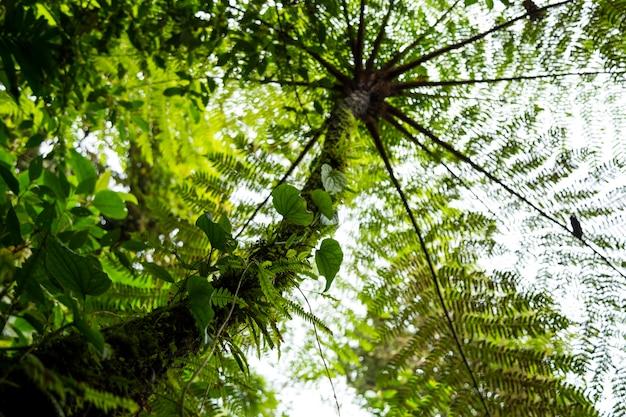 Niskiego kąta widok drzewo w tropikalnym tropikalnym lesie deszczowym przy costa rica Darmowe Zdjęcia