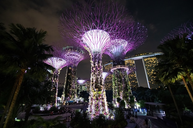 Nocny Widok Na Supertrees Grove, Cloud Forest Flower Dome At Gardens At The Bay Darmowe Zdjęcia