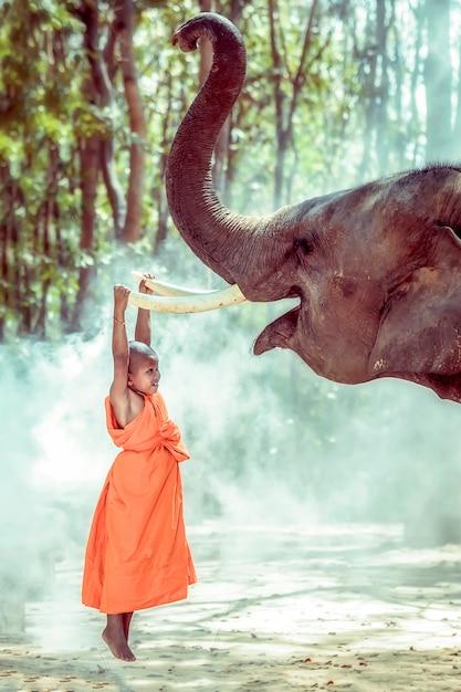 Nowicjusza Mnich Buddyjski Jest Współczującym Słoniem, Surin, Tajlandia Premium Zdjęcia