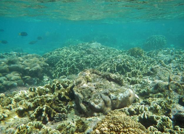 Nurkowanie Na Wyspie Socotra, Ocean Indyjski, Jemen Premium Zdjęcia