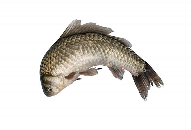 Nurkowanie Z Rybami Premium Zdjęcia