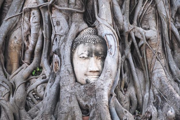 Obraz Buddy W Korzeniu Drzewa Bodhi Premium Zdjęcia