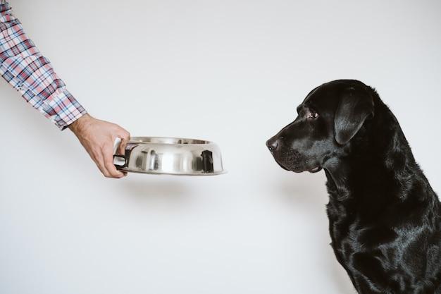 Obsługuje Rękę Trzyma Puchar Psiego Jedzenie. Piękny Czarny Labrador Czeka Jeść Jego Posiłek. Dom, Wnętrze Premium Zdjęcia