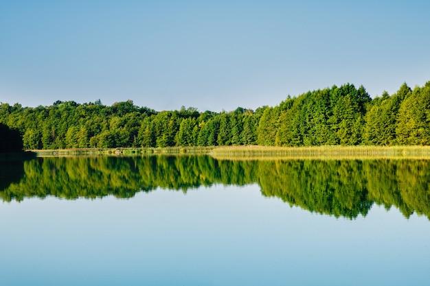Odbicie Lasu W Wodzie Jeziora Premium Zdjęcia