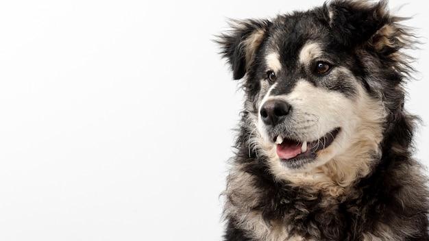 Odbitkowy Pies Odwracający Wzrok Darmowe Zdjęcia