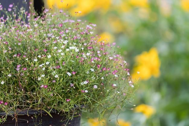 Oddech dziecka małe kwiaty w ogrodzie. Premium Zdjęcia