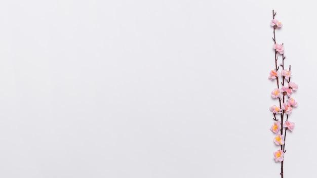 Oddział sakura na biały Darmowe Zdjęcia