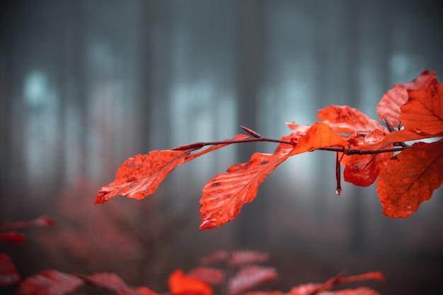 Oddział Z Pomarańczowymi Liśćmi Jesienią Darmowe Zdjęcia