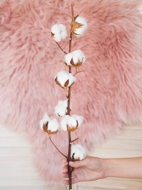 Odgórnego Widoku Kobiety Mienia Gałąź Z Bawełnianymi Kwiatami Darmowe Zdjęcia