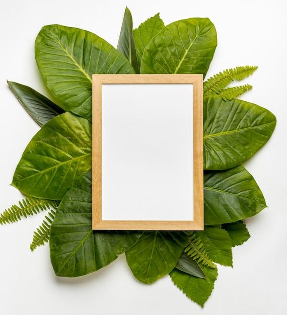 Odgórnego Widoku Kolekcja Zielony Liścia Pojęcie Darmowe Zdjęcia