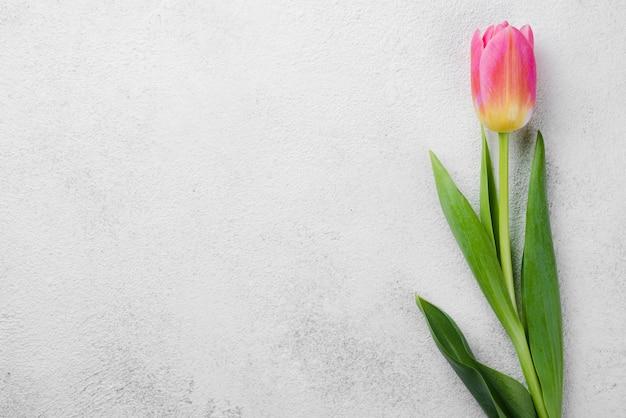 Odgórnego Widoku Różowy Tulipan Na Stole Darmowe Zdjęcia