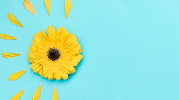 Odgórnego Widoku żółta Gerbera Z Przestrzenią Premium Zdjęcia