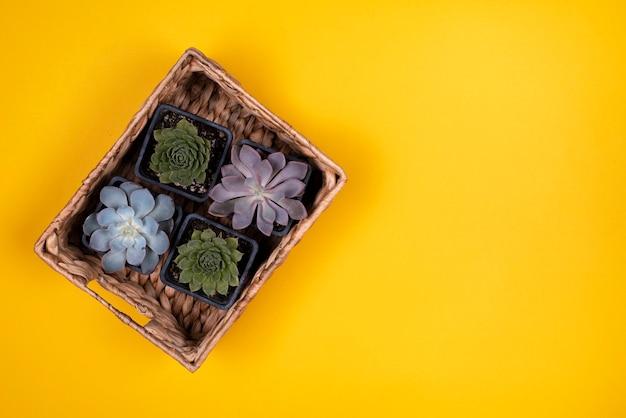 Odgórny Widok Kosz Rośliny Na Koloru żółtego Stole Darmowe Zdjęcia