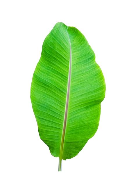 Odizolowywa bananowego liść na bielu Premium Zdjęcia